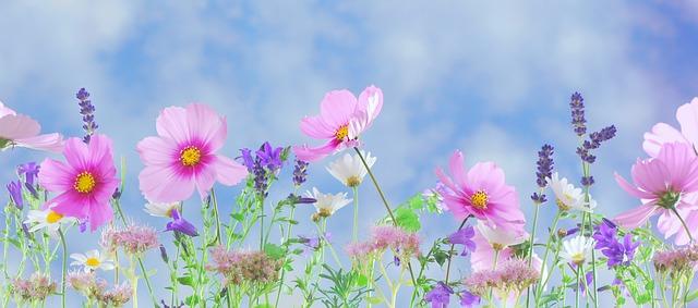 květinový vzor.jpg