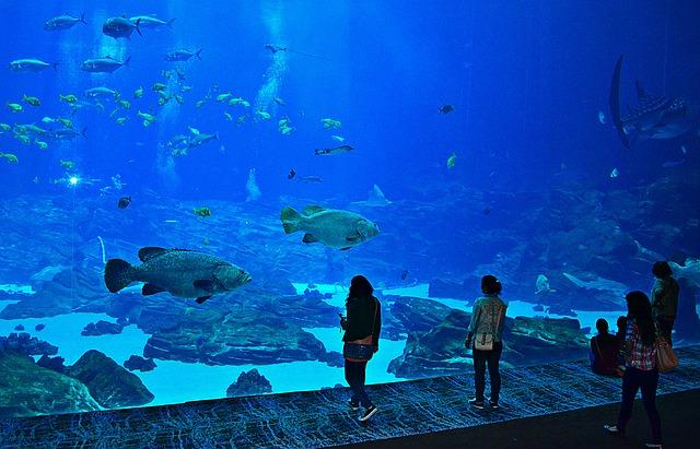 Najväčšie akvária sveta